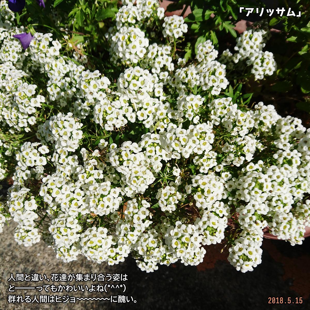 DSC_7339-1.jpg