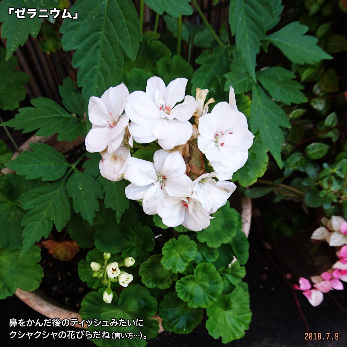 DSC_7741.jpg