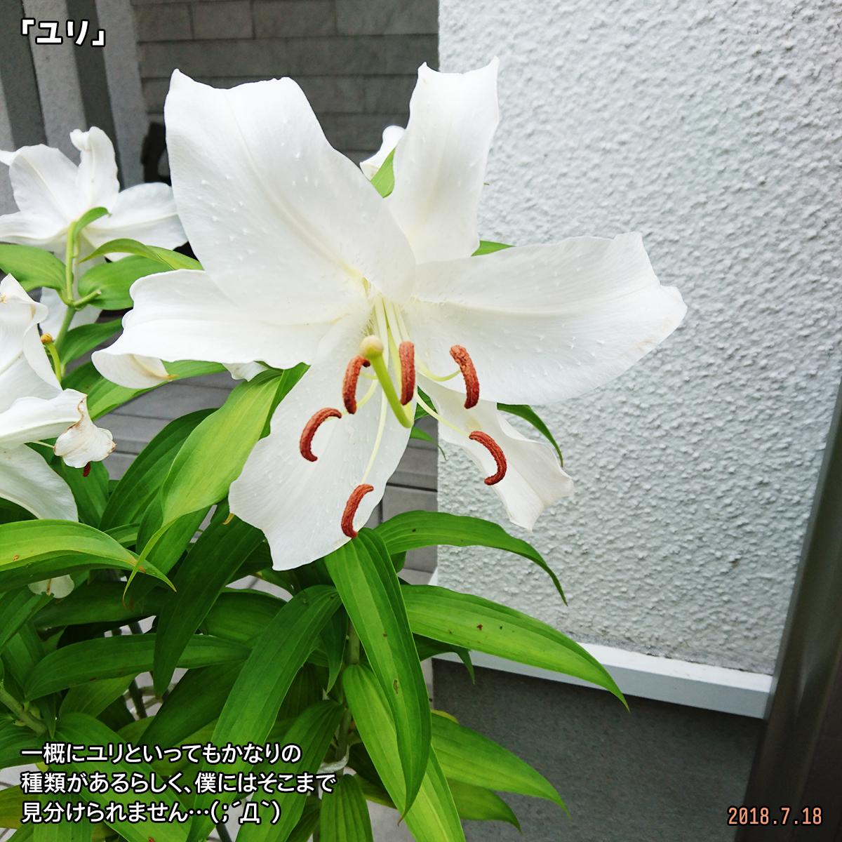 DSC_7787.jpg