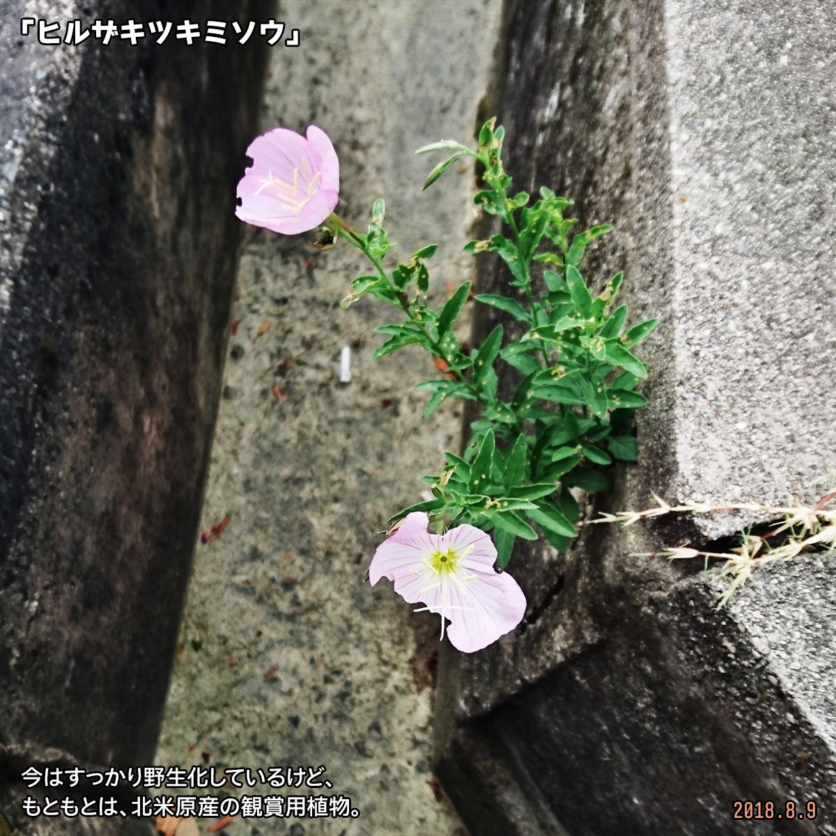 DSC_7919.jpg