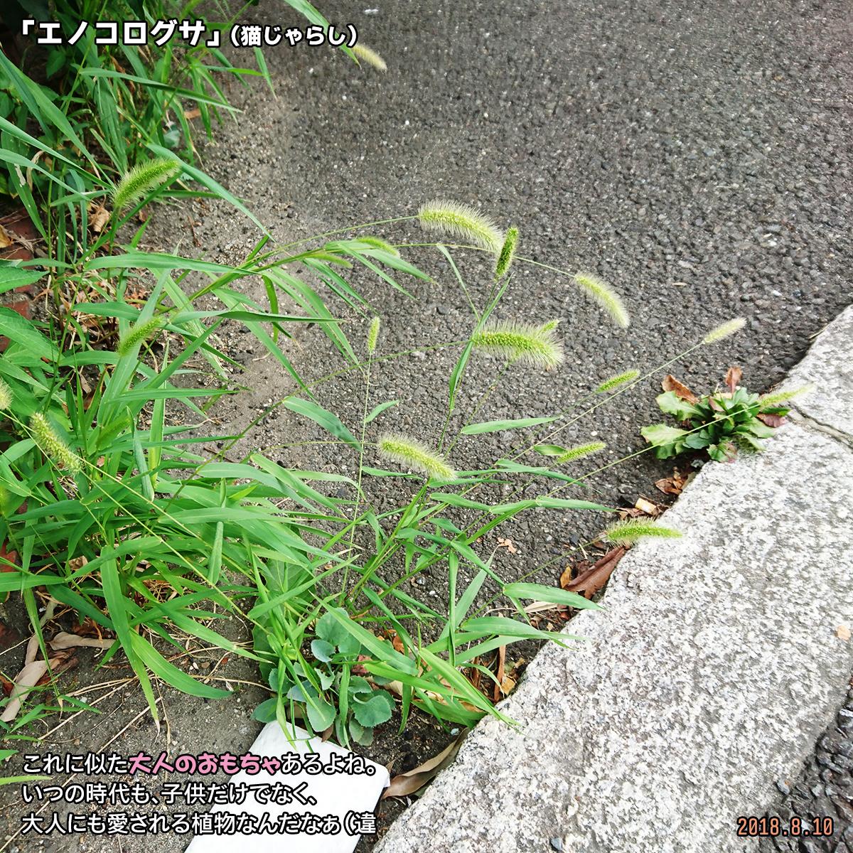 DSC_7940.jpg