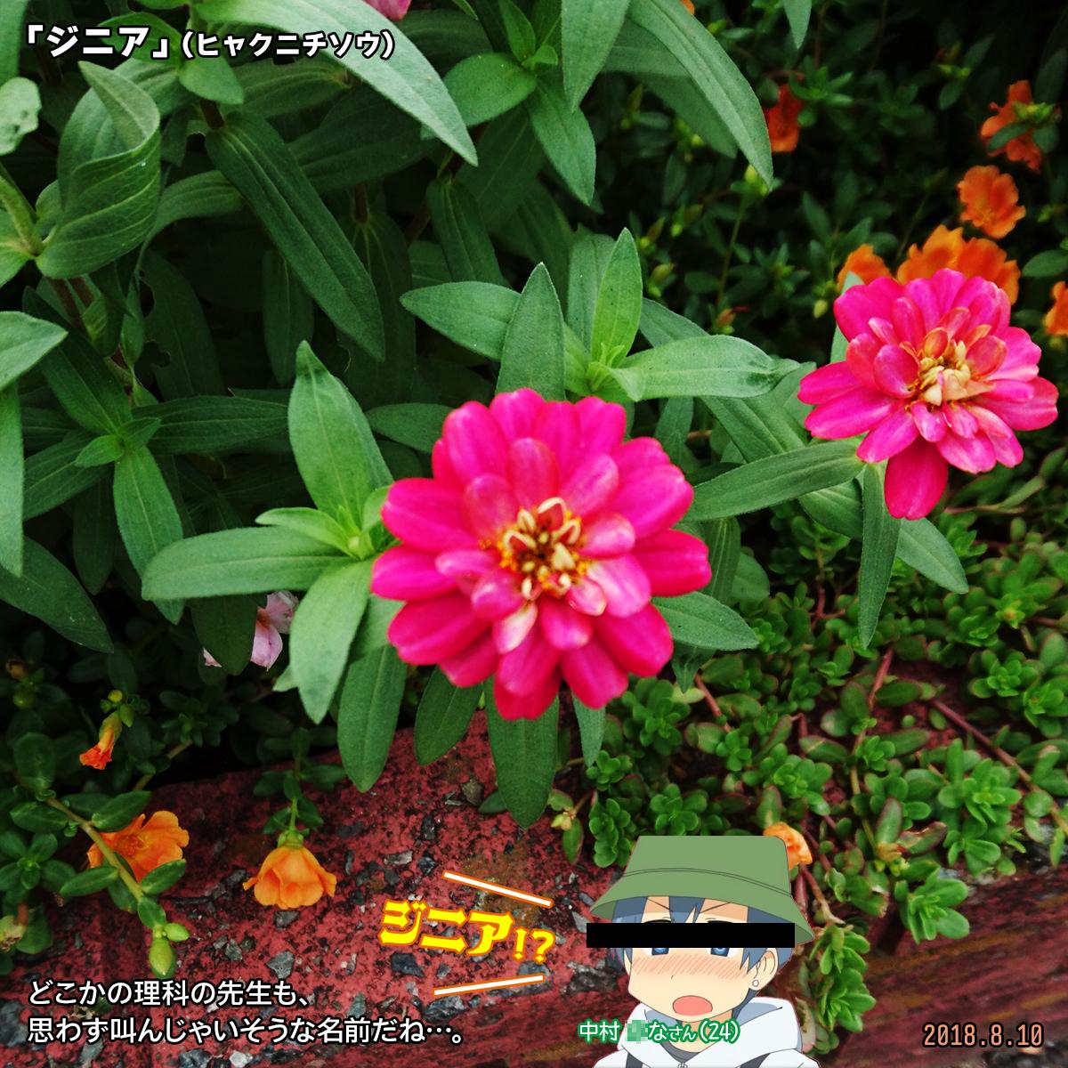 DSC_7946_01.jpg
