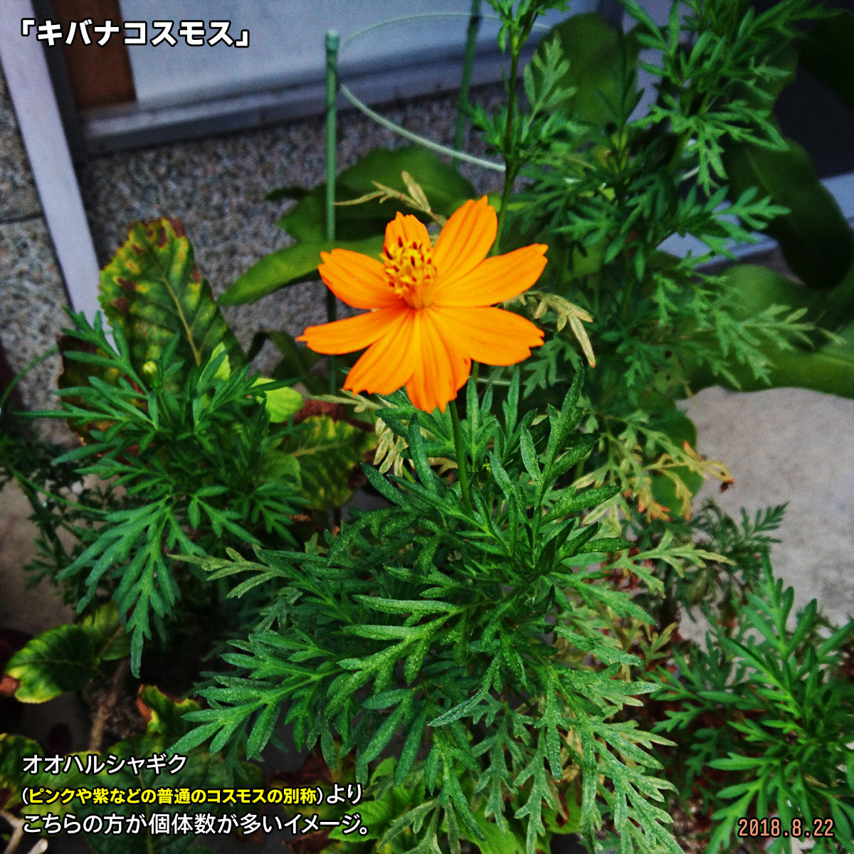 DSC_7990.jpg