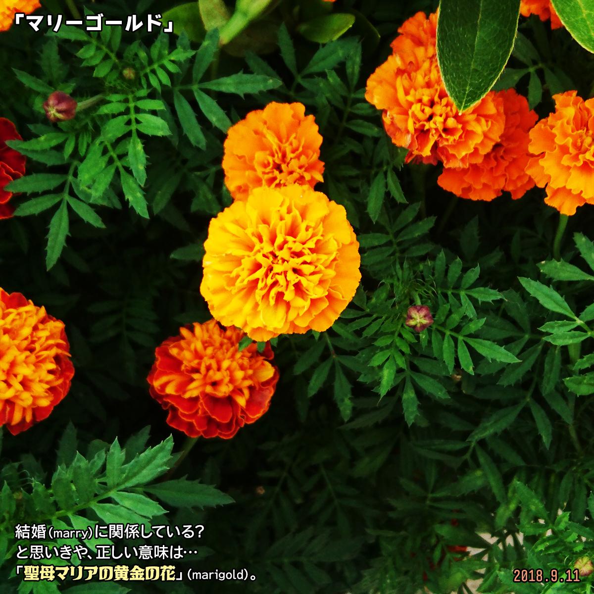 DSC_8155.jpg