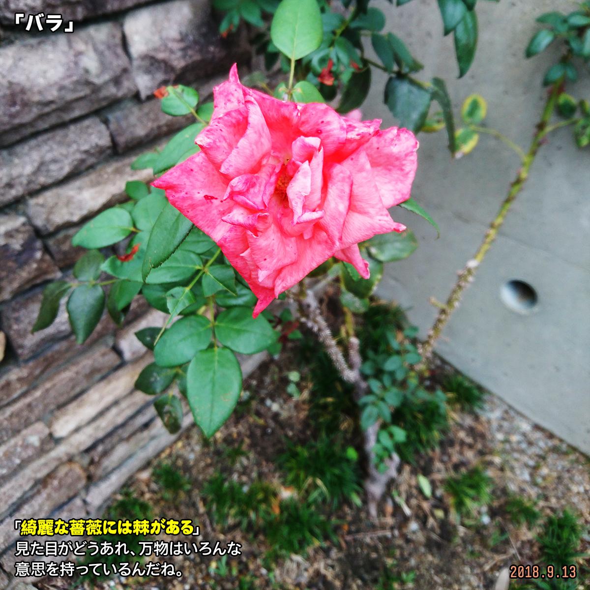 DSC_8177.jpg