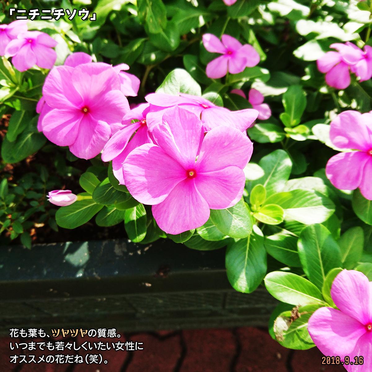 DSC_8206.jpg