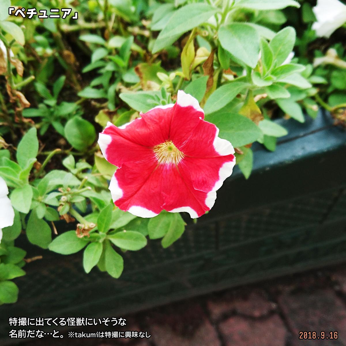 DSC_8213.jpg