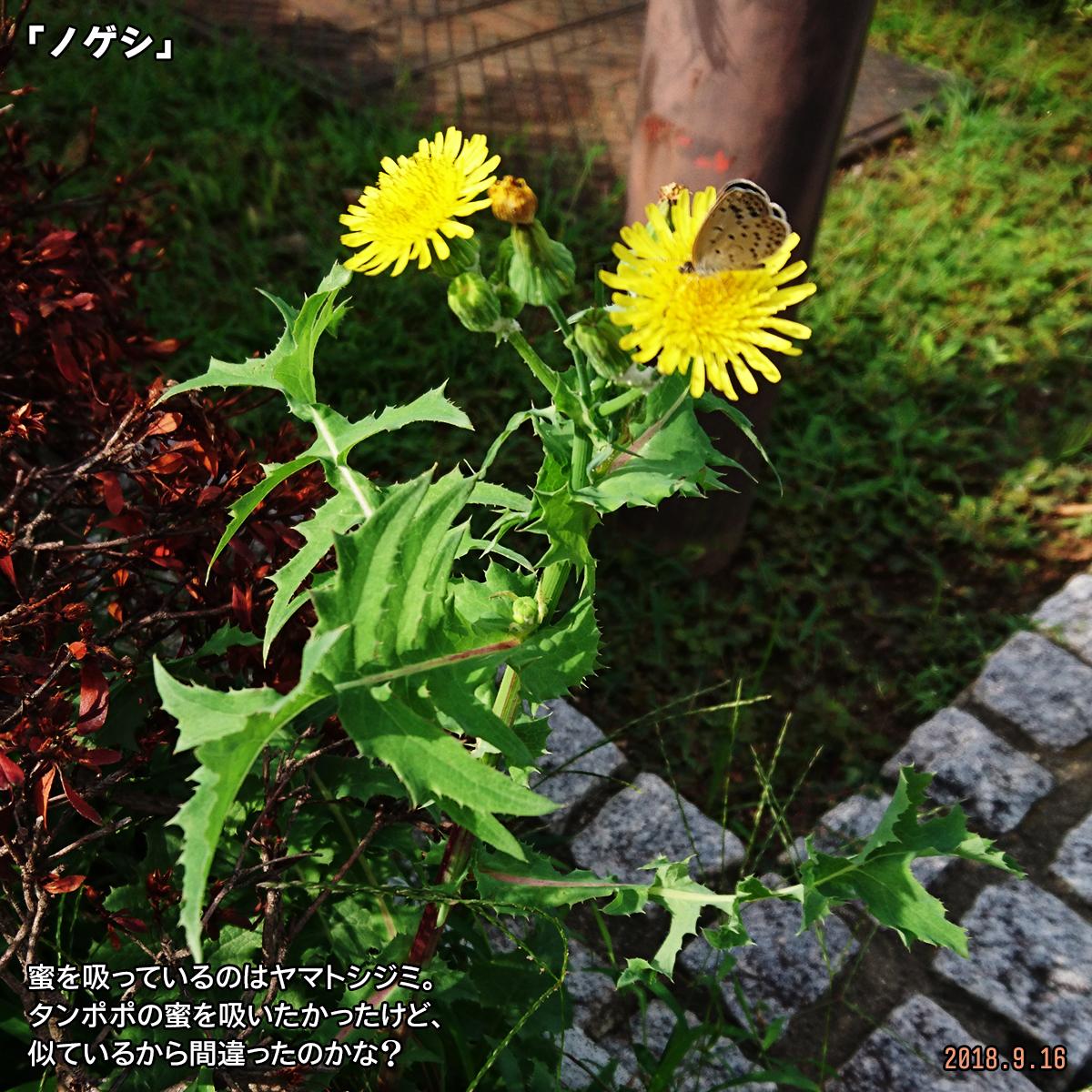 DSC_8217.jpg