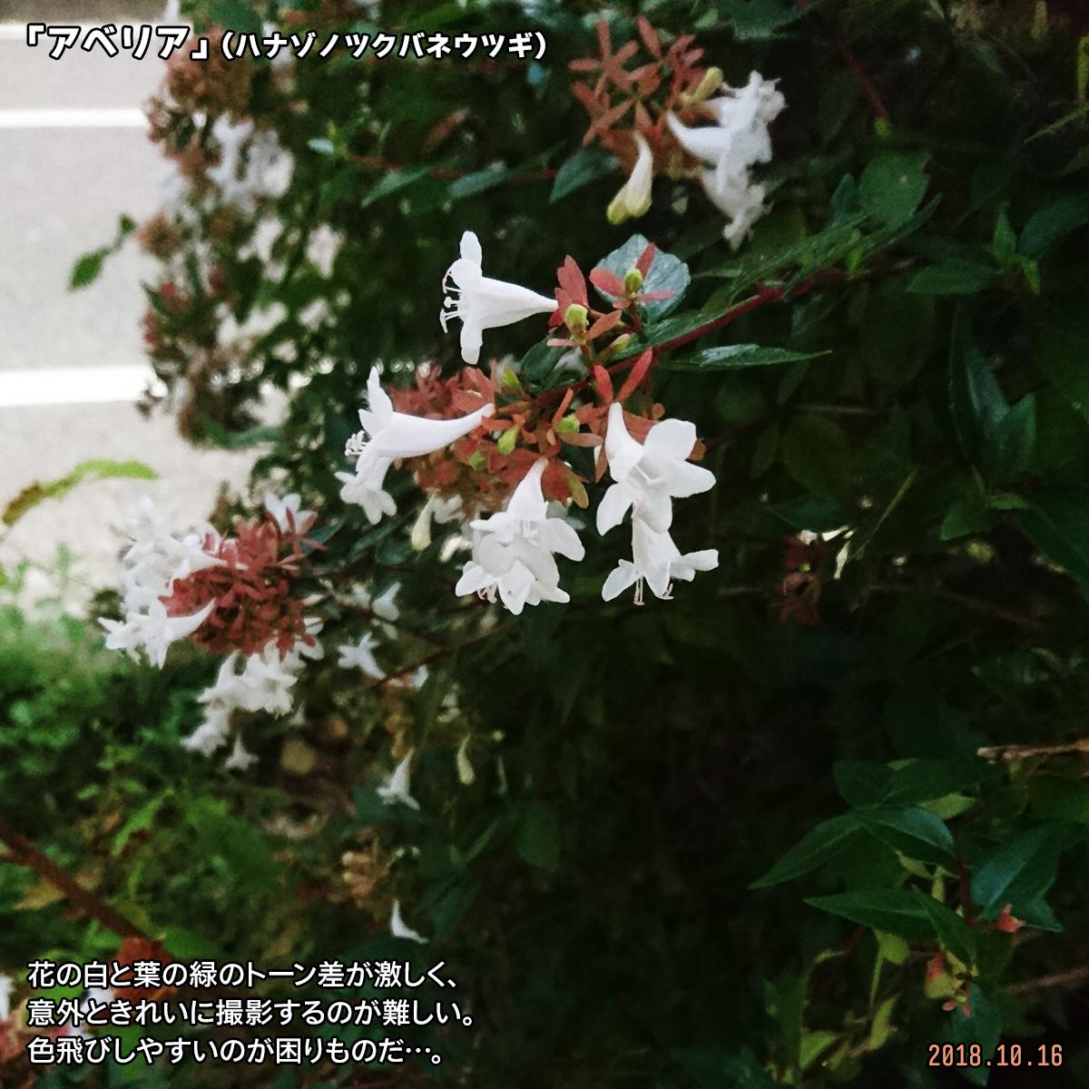 DSC_8427.jpg