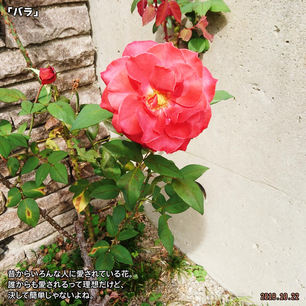 DSC_8493_20181130174831701.jpg