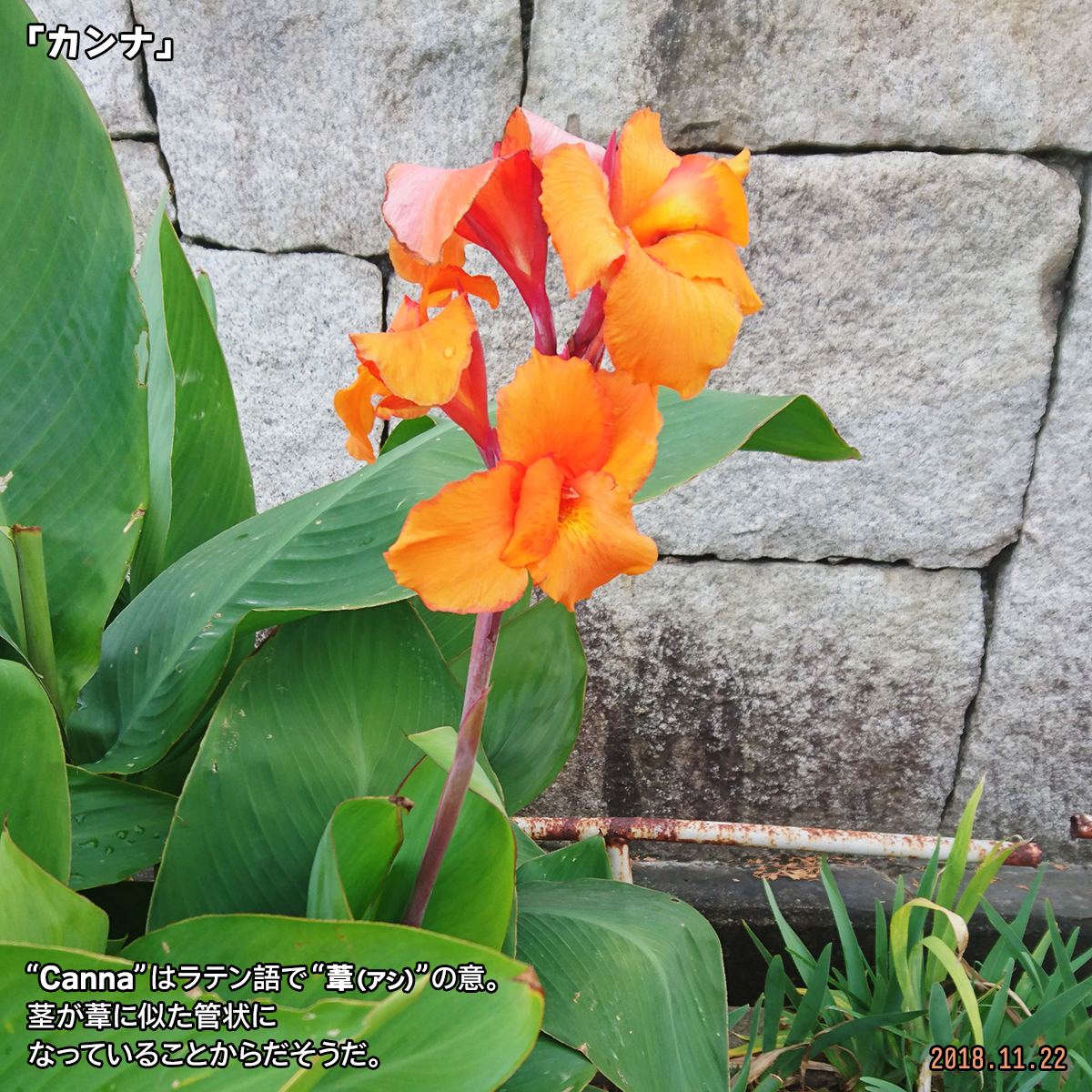 DSC_8650.jpg