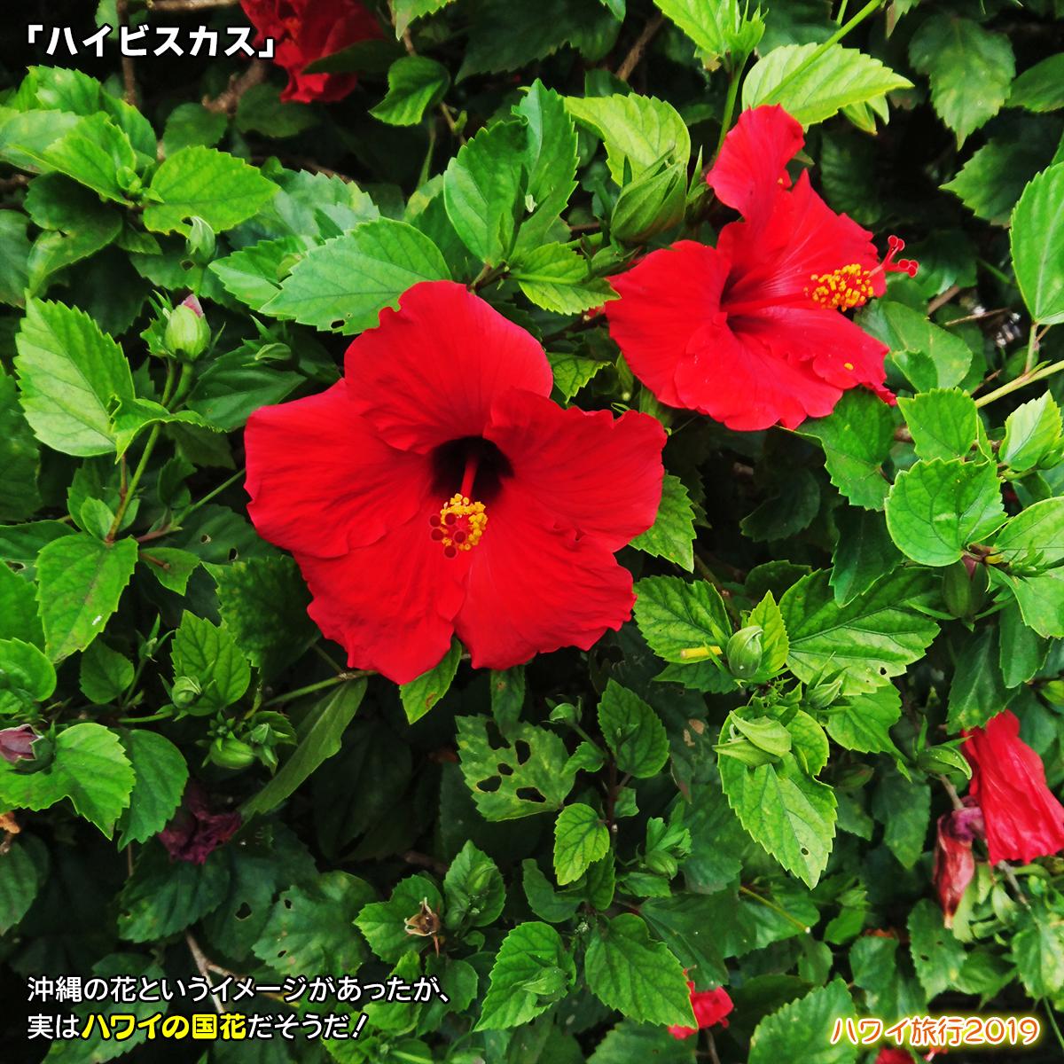 DSC_9122.jpg