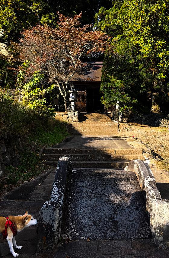 miyota20181029-1.jpg