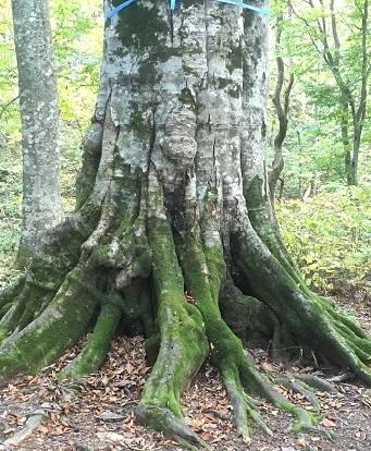 白神の森2