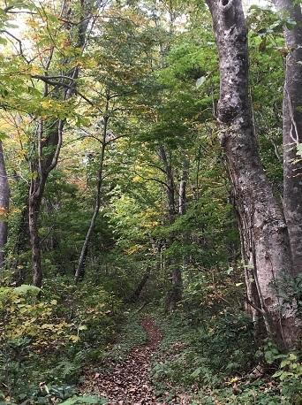 白神の森3