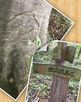 白神の森4