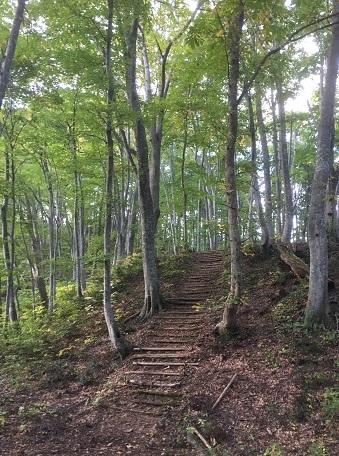 白神の森6