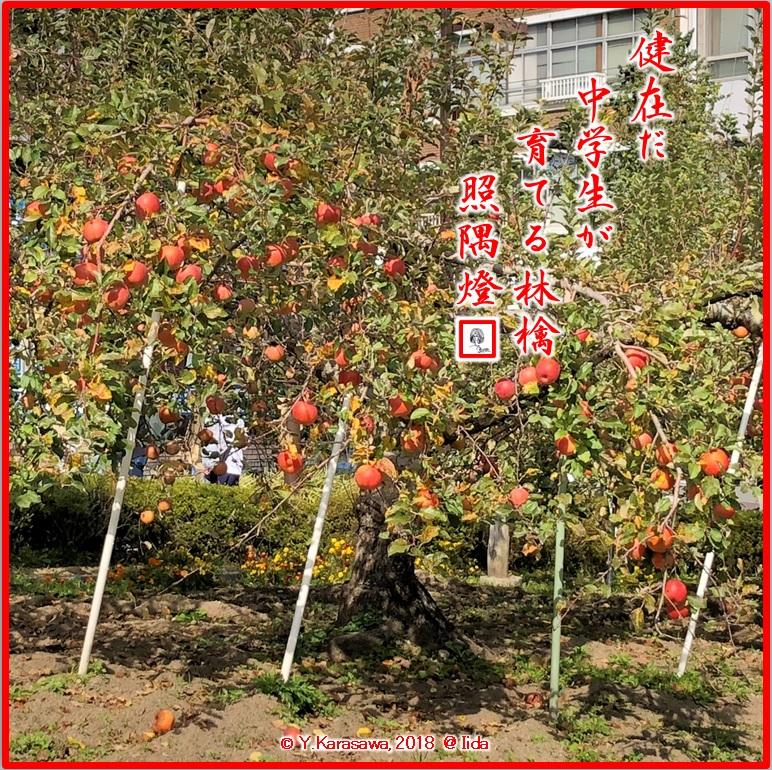181117林檎並木LRG