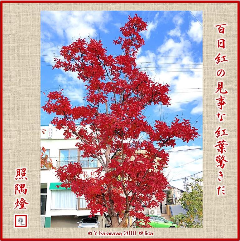 181129百日紅の紅葉LRG