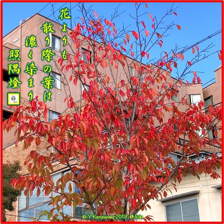 181130桜の紅葉LRG