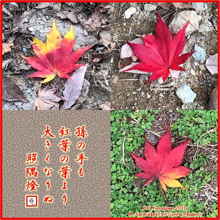 181209楓の落ち葉LRG