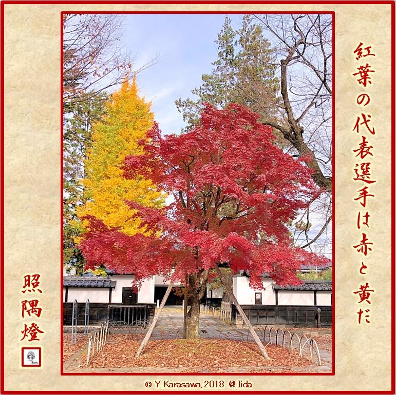 181212楓と銀杏の紅葉LRG