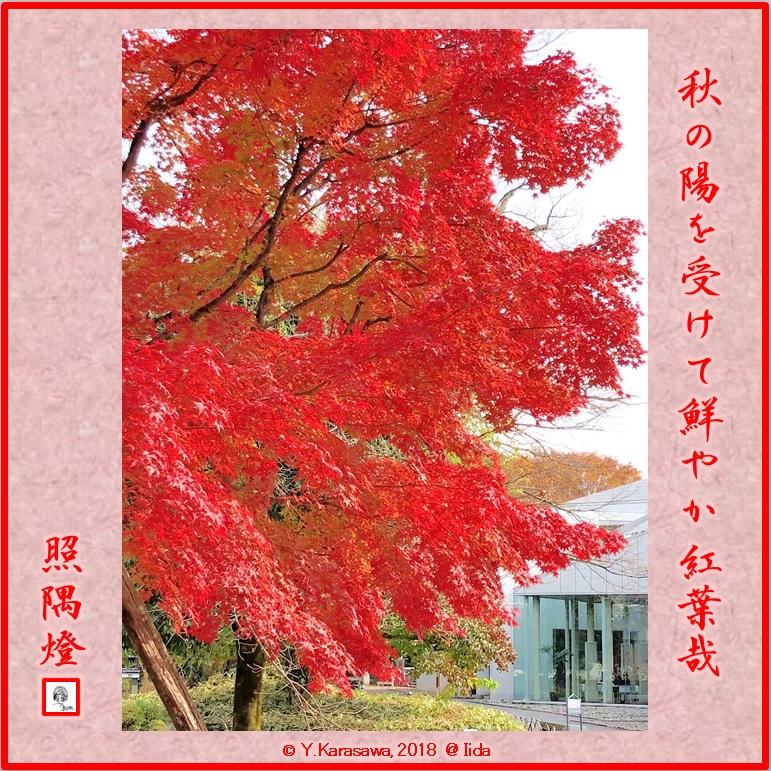 181213楓の紅葉LRG