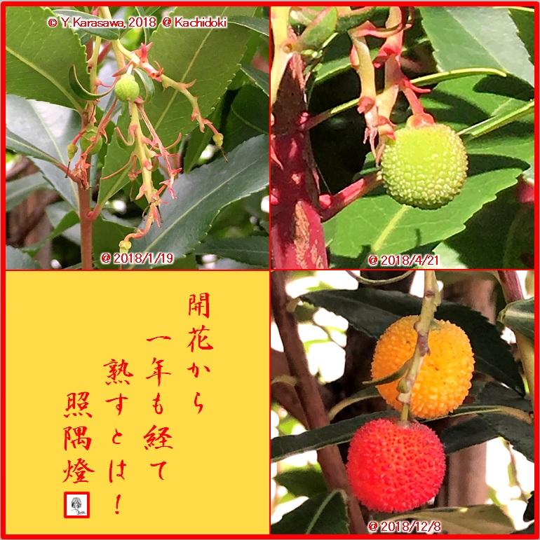 181226苺の木の実LRG