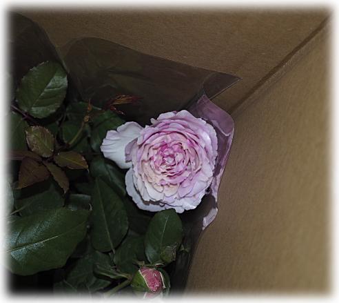 dh335.jpg
