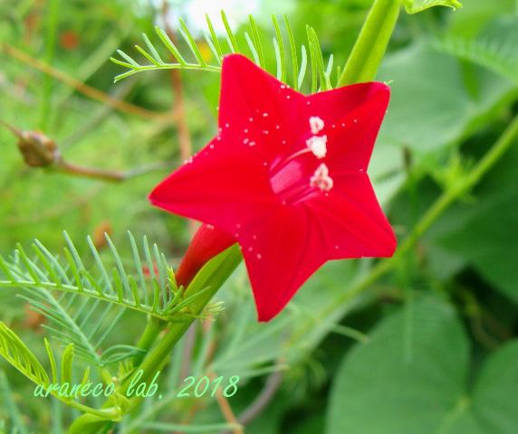 10月12日red star