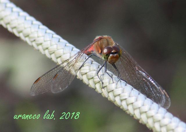 10月9日蜻蛉5