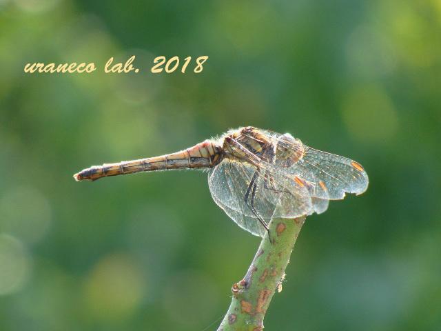 11月2日蜻蛉3
