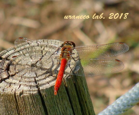 11月2日蜻蛉2