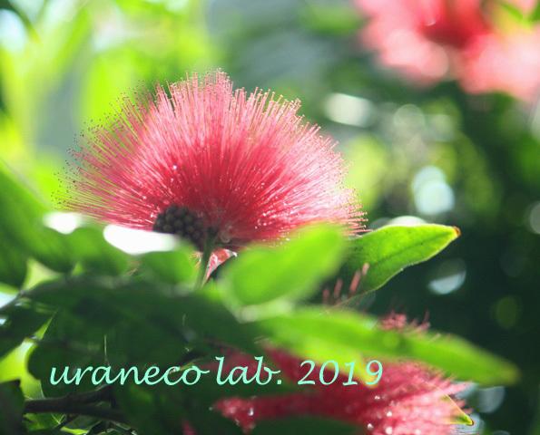 1月2日熱帯の花2