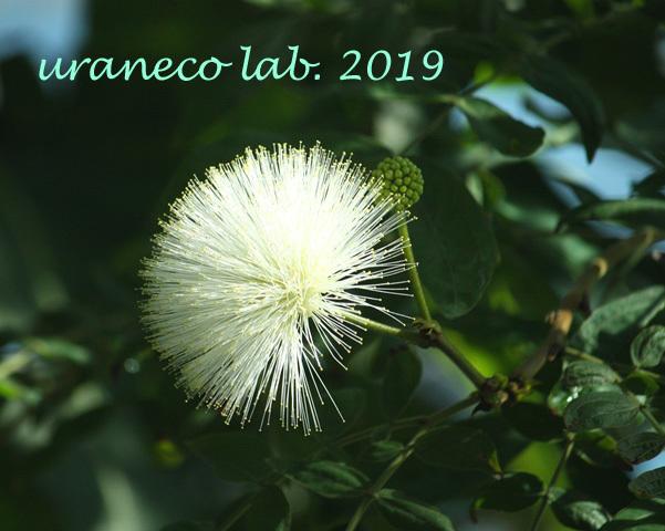 1月2日熱帯の花