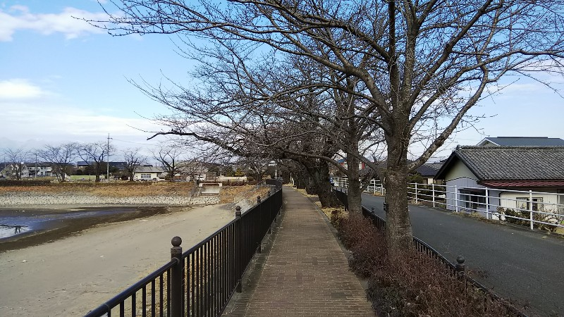 波志江遊歩道②ソメイヨシノ2019