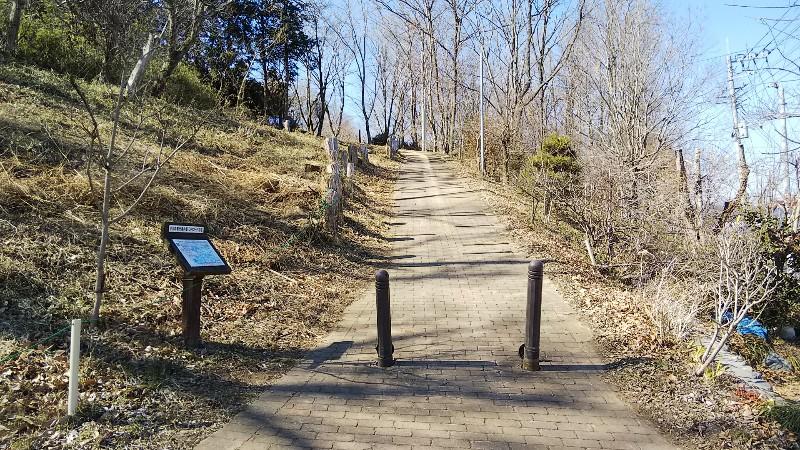 カタクリとオオムラサキの林登坂201902