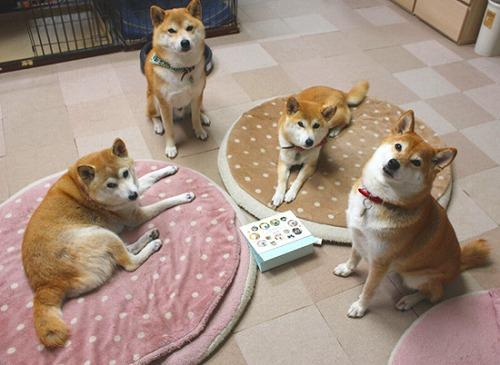 凜ちゃん、純ちゃん、翔ちゃん、麗ちゃん(愛知県)