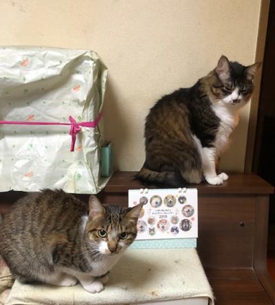 つくしちゃん & 天ちゃん(東京都)