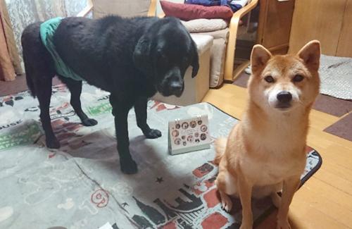 クロちゃん(左)&チビちゃん(右)(埼玉県)