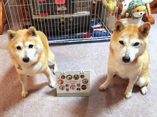 仲良し親子のサチちゃん(左)、ヒメちゃん(右)(富山県)