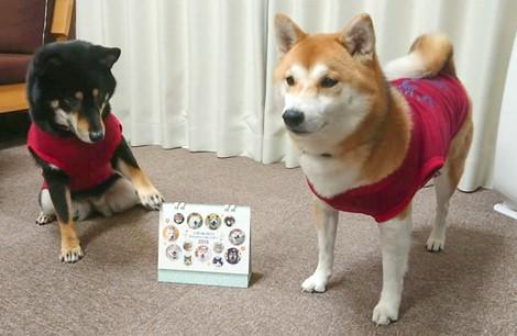 もみじちゃん(左)、コロちゃん(右)(広島県)