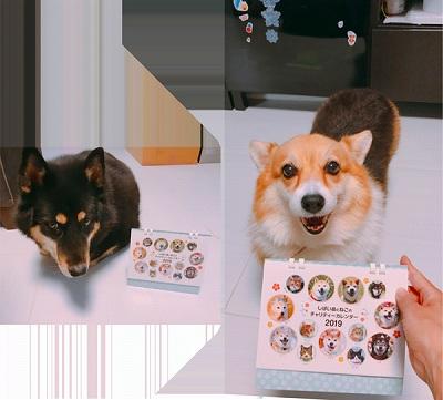 チラちゃん(左)、モカちゃん(右)