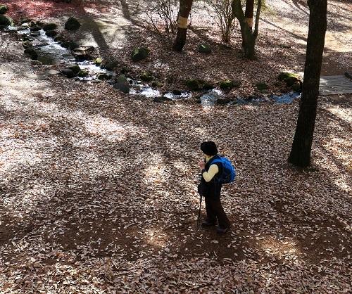 059落ち葉の森