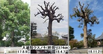 daiyuuji3.jpg
