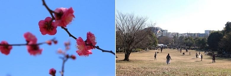 20190113山田富士公園Ha