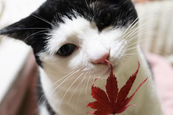 晩秋の香り、晩秋の音