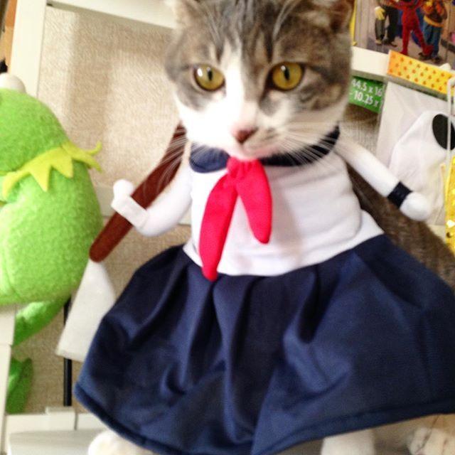 セーラー服を 着た 猫