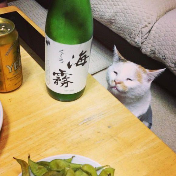 アルコールの濃度が一番高い酒とは?