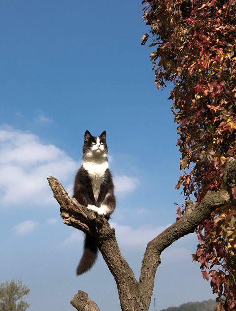 木の上で 考える 猫